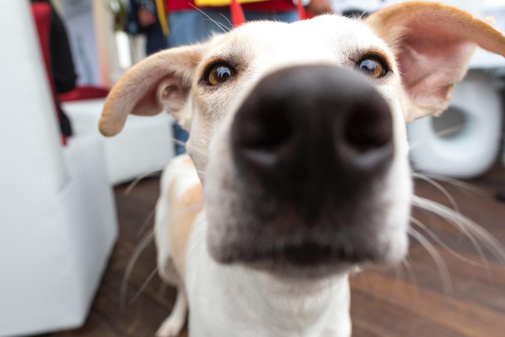 ¿Para qué sirve el contrato en una adopción animal?
