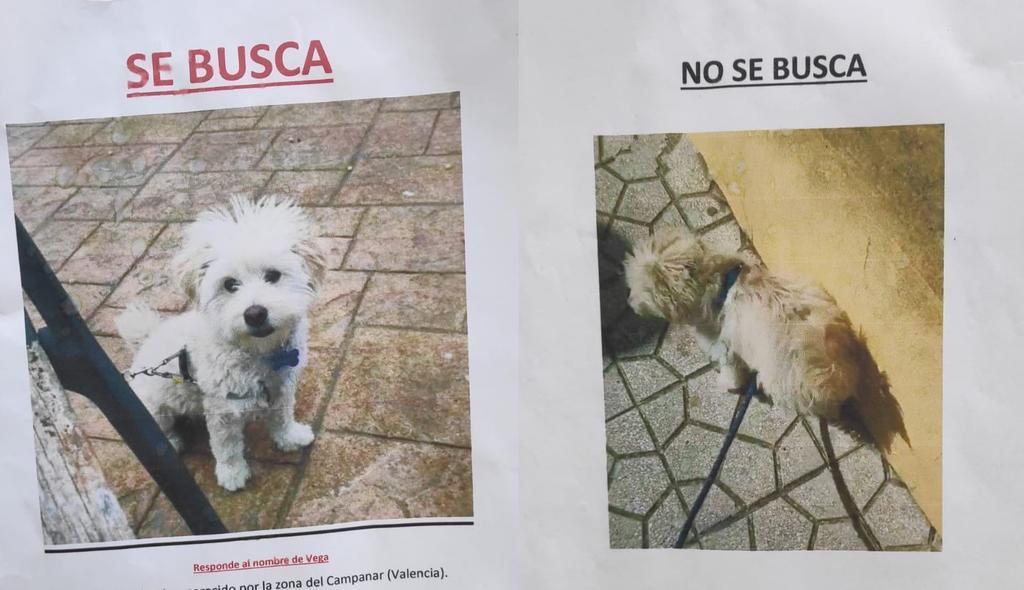 'Tengo derecho a estar con él'; exnovios se pelean con carteles de perro 'desaparecido'