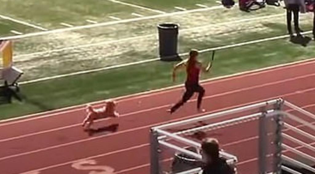 Perro se cuela en carrera de relevos y 'gana' el primer lugar