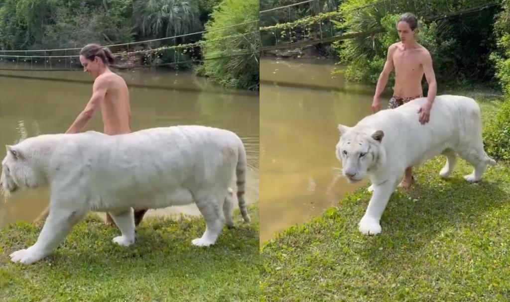 'Encantador de felinos'; hombre se vuelve viral por pasear junto a tigre blanco