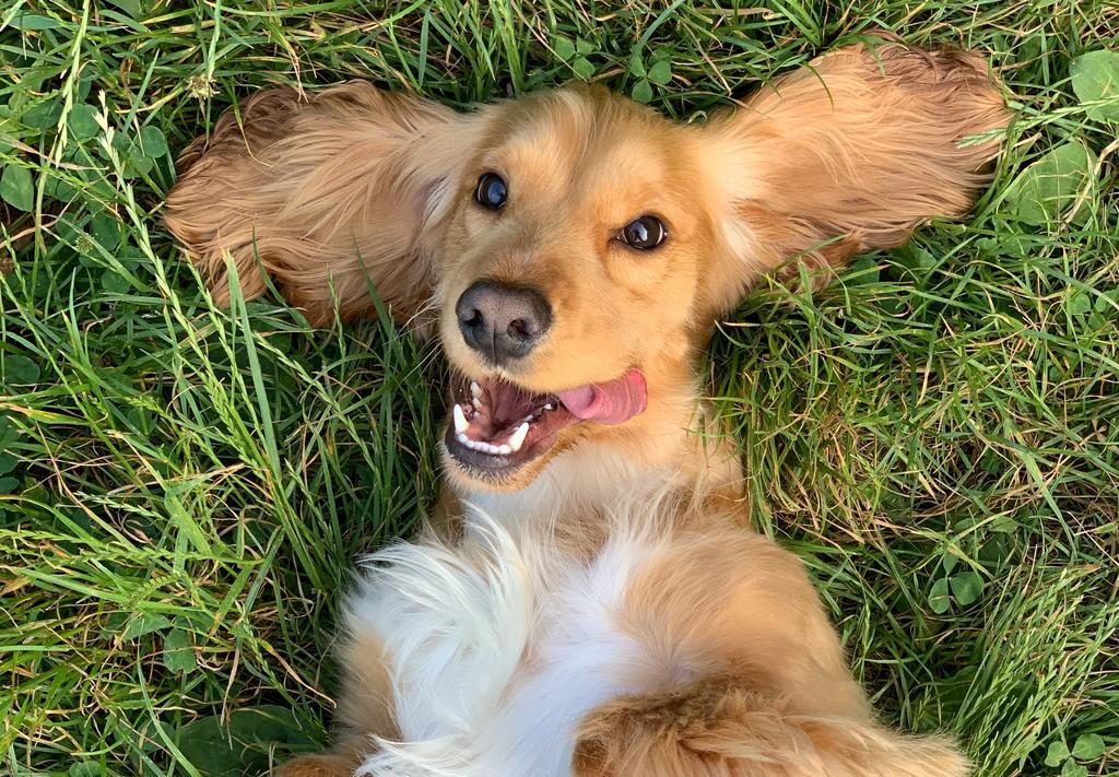 Los cuidados correctos para la salud bucal de tu perro