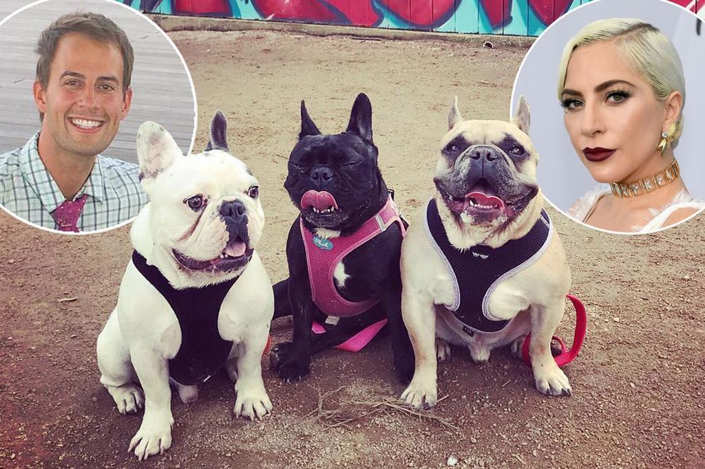 Robo a perros de Lady Gaga fue una coincidencia, afirman autoridades