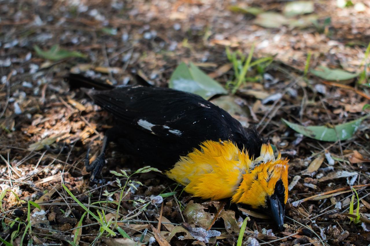 Piden a Profepa indagar sobre la muerte de aves