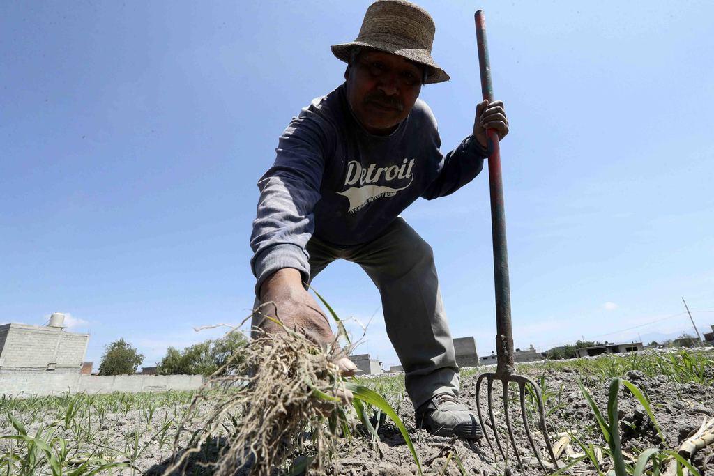 Estrés hídrico 'asfixia' a campesinos mexiquenses
