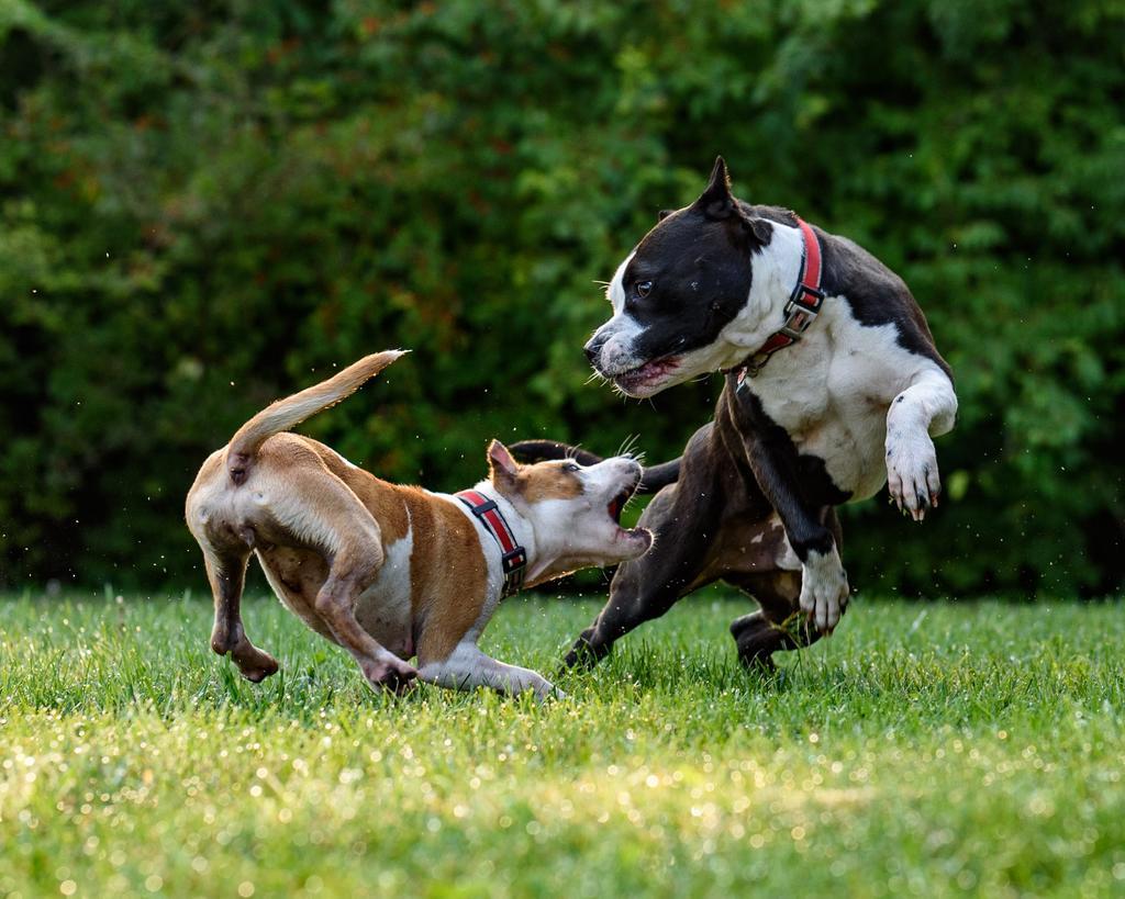 ¿Cuándo debes aplicar la vacuna de la rabia a tu mascota?