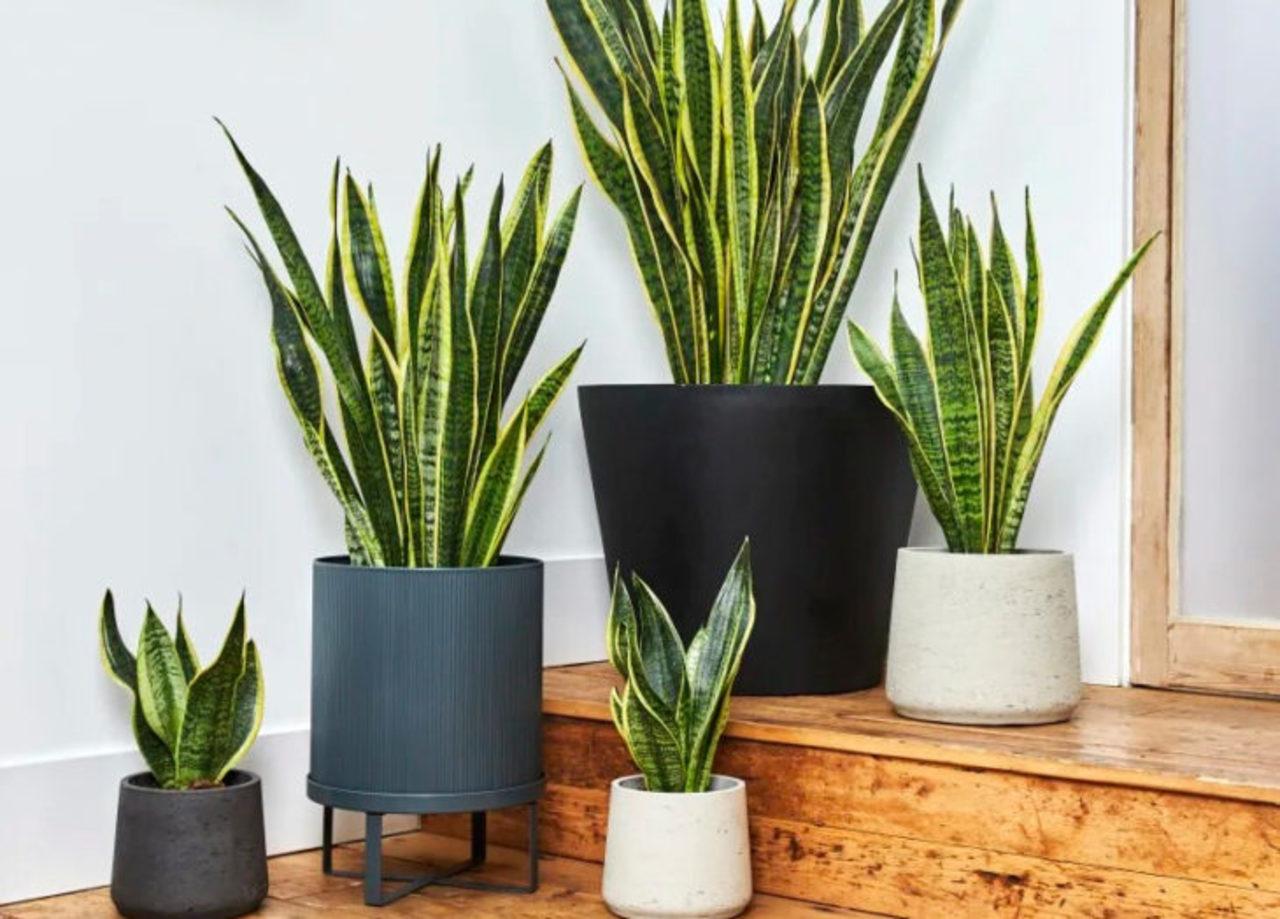 Las plantas más fáciles de cuidar