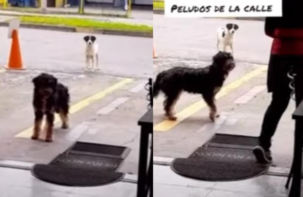 VIRAL: Perrito lleva a comer a otro al lugar donde lo alimentan