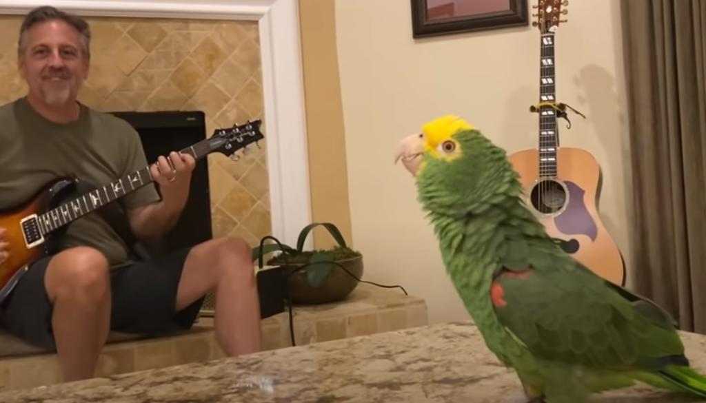 'Tico', el loro que conquista la red cantando canciones de rock clásicas