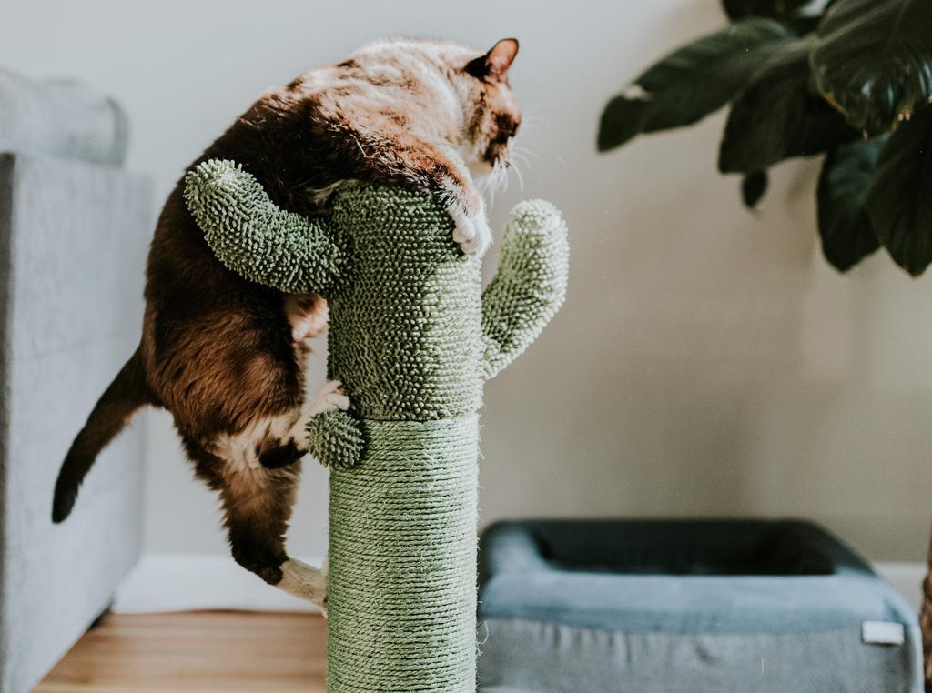 Formas efectivas de adiestrar a tu gato desde pequeño