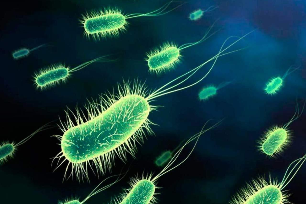 Reprograman bacterias sintéticas para ser resistentes a los virus