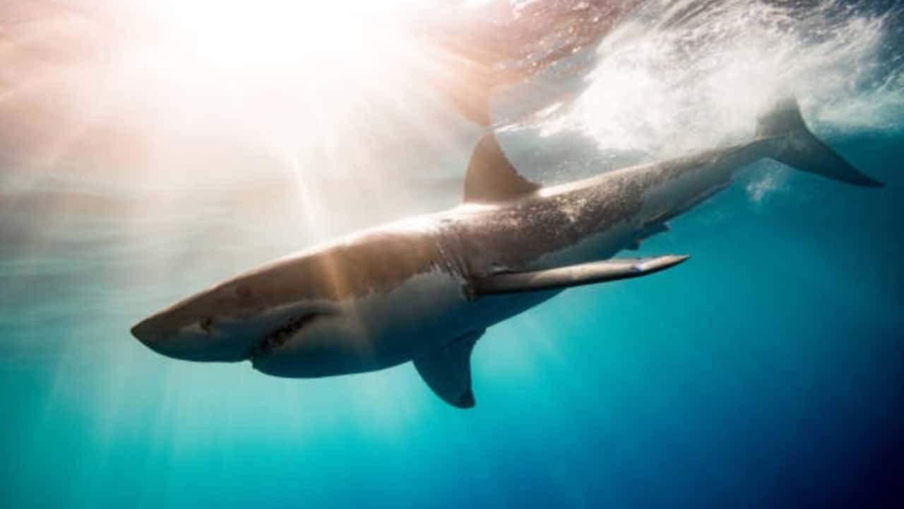 Hace 19 millones de años los tiburones casi desaparecen de los océanos