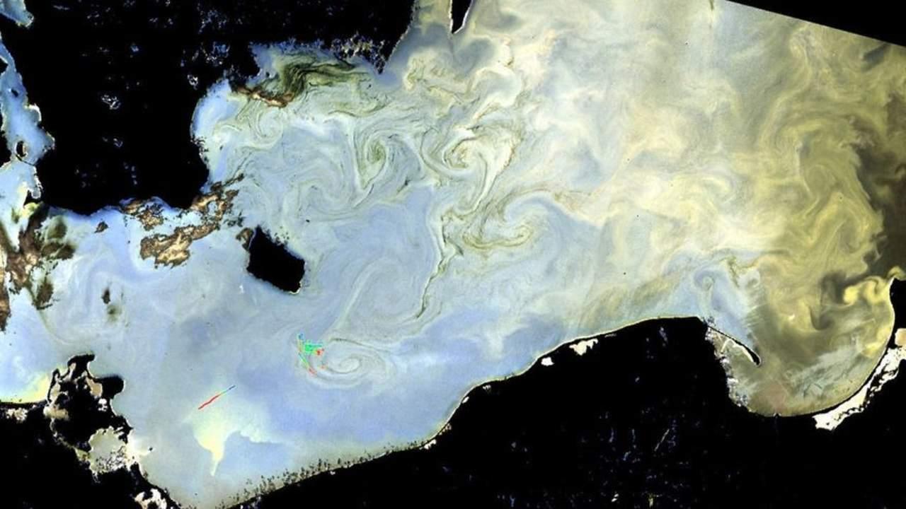 Daños de algas nocivas aumentan a la vez que la explotación marina