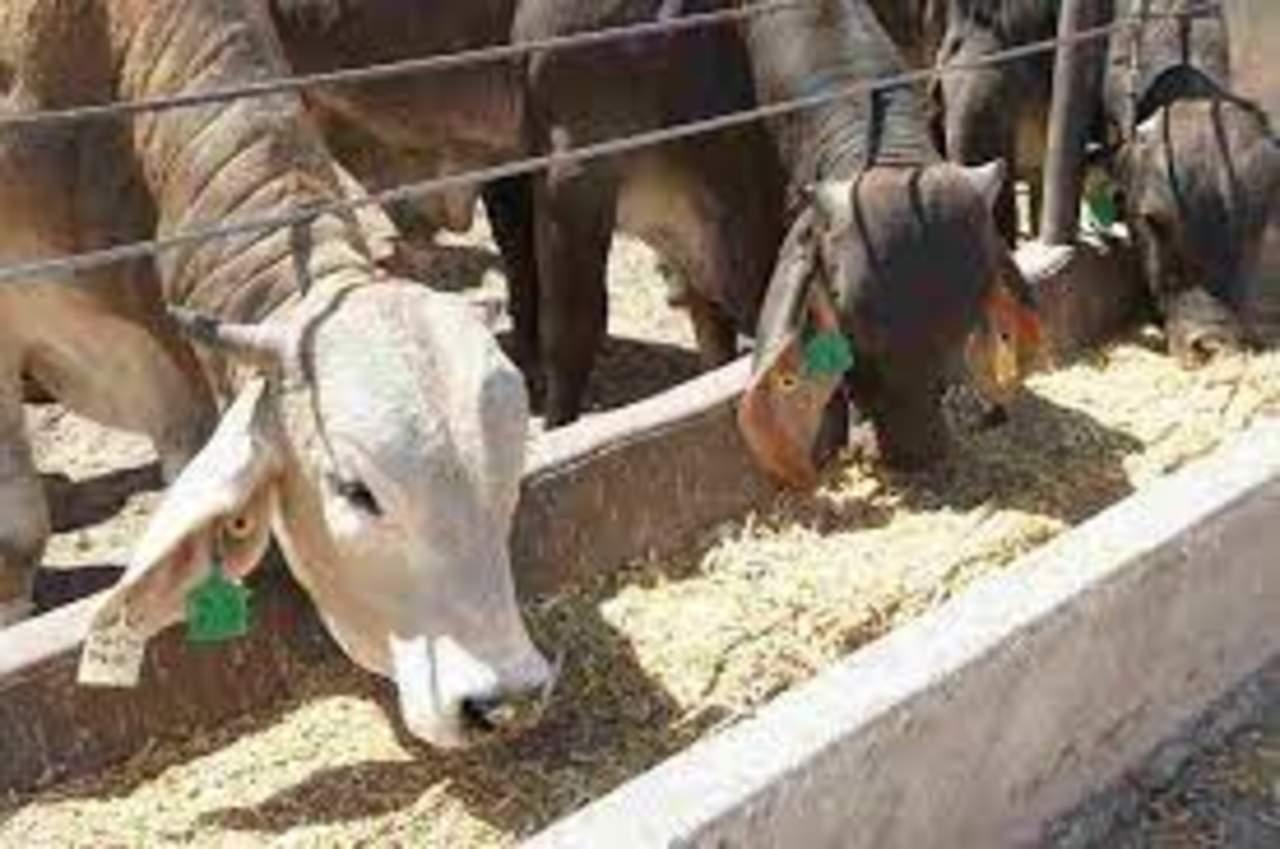Constata estudio cambios en ganadería y alimentación durante 4 mil años