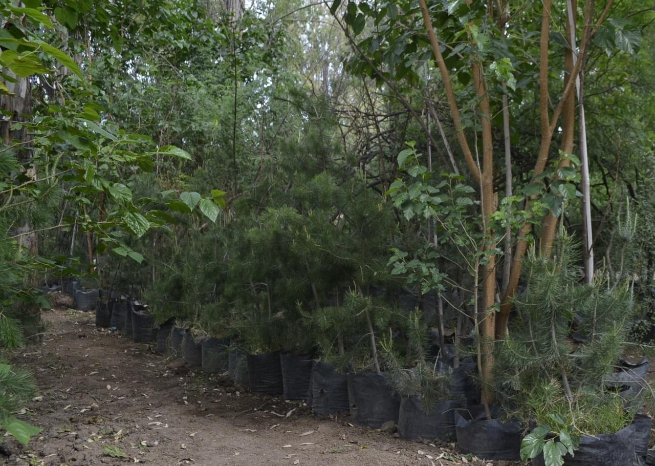Premian a Durango por reforestación