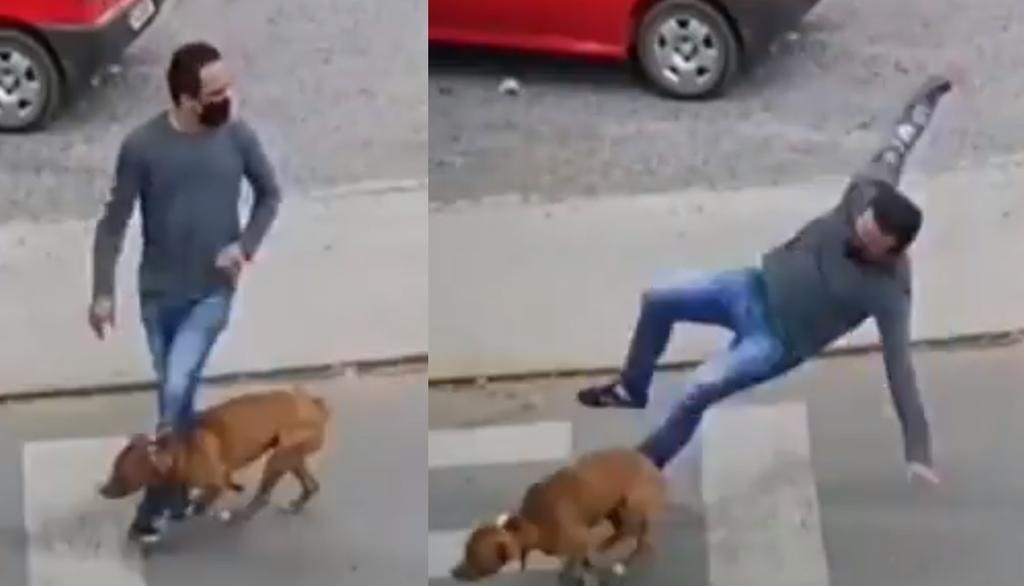 VIRAL: Perro 'atropella' a un hombre que cruzaba la calle