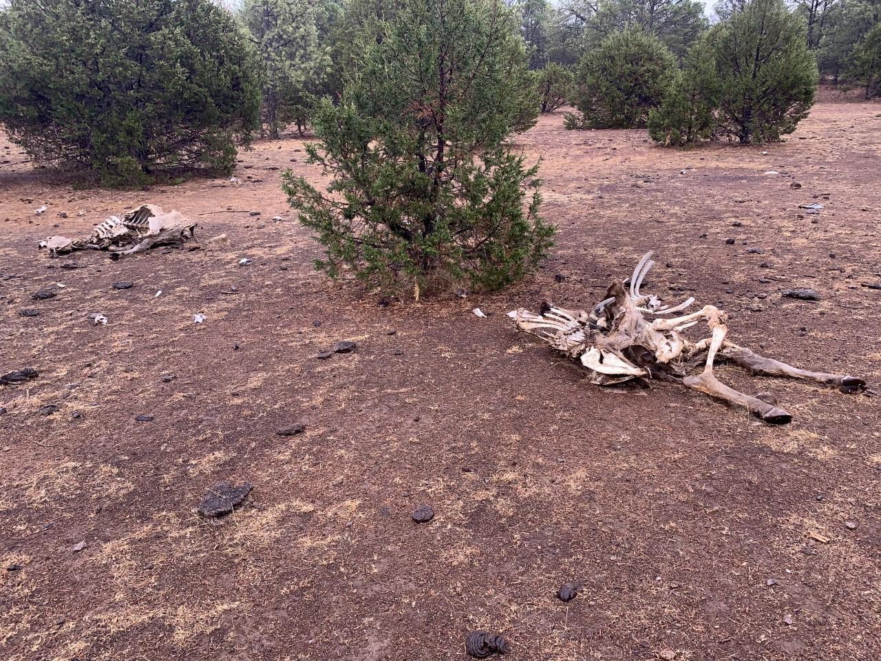 Suman 2,337 reses muertas por sequía en Durango capital