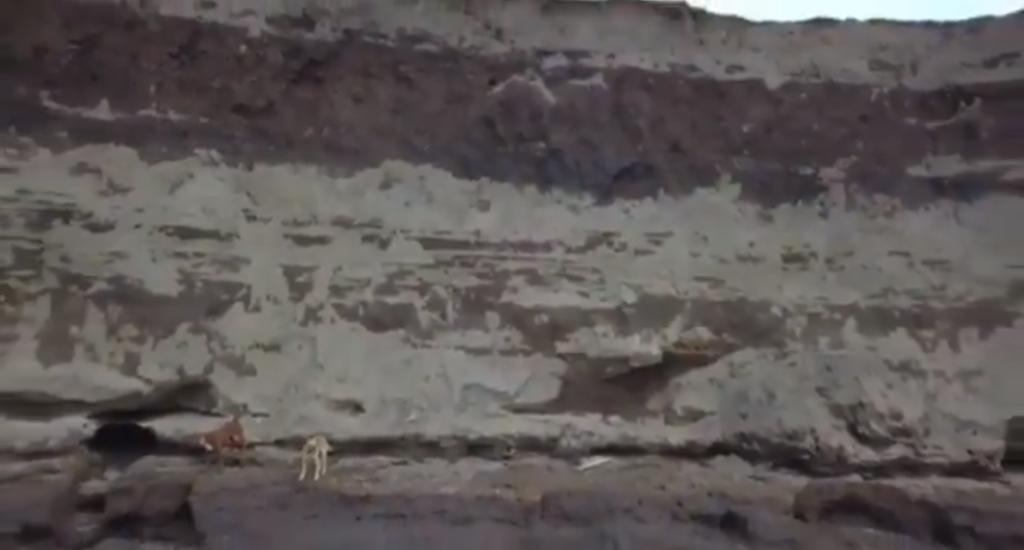Captan con vida a perros atrapados en socavón de Puebla