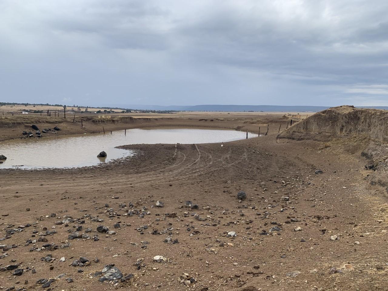 Han muerto 2,337 reses a causa de la sequía en Durango capital