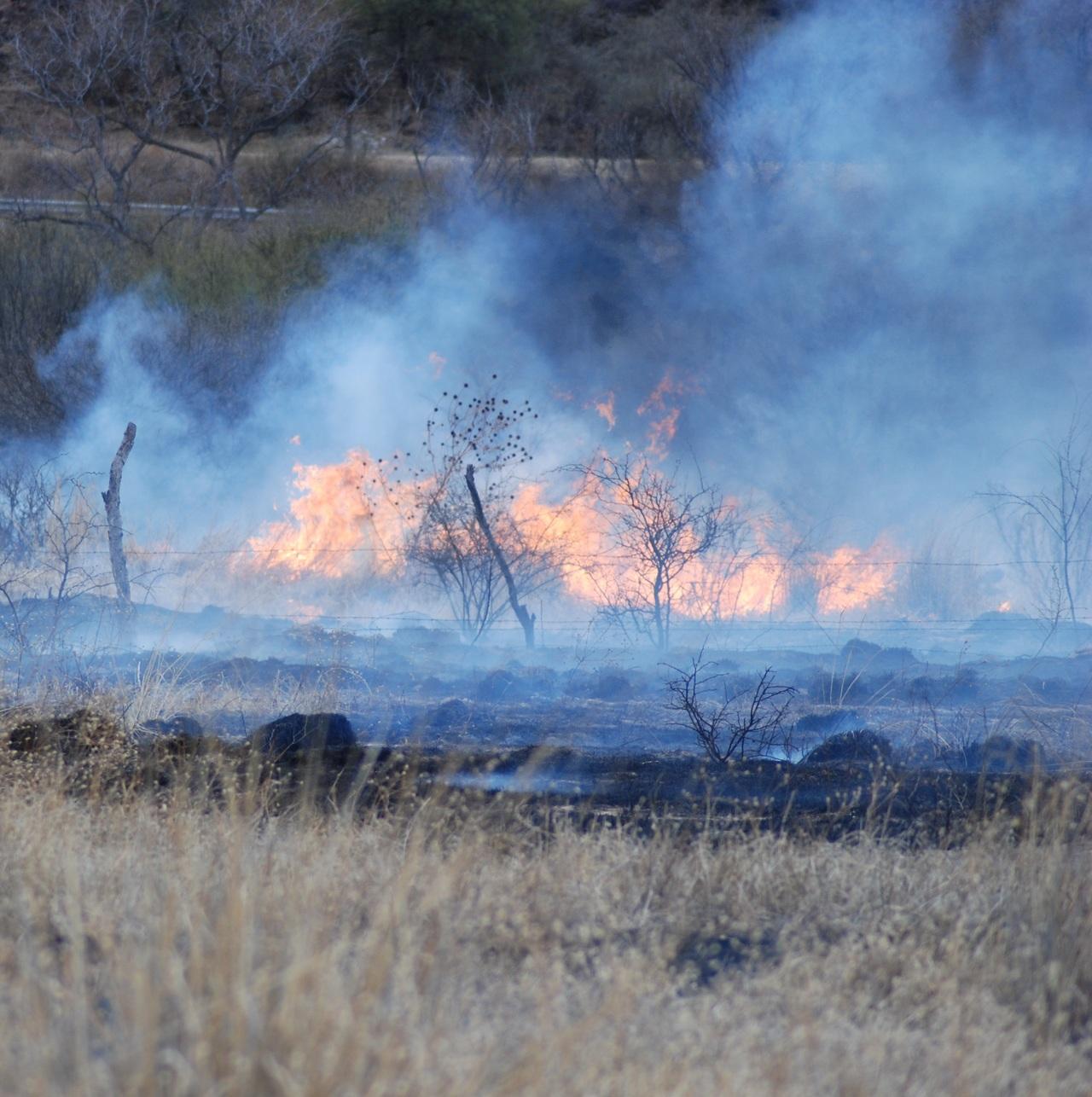 Durango tiene tres incendios forestales activos