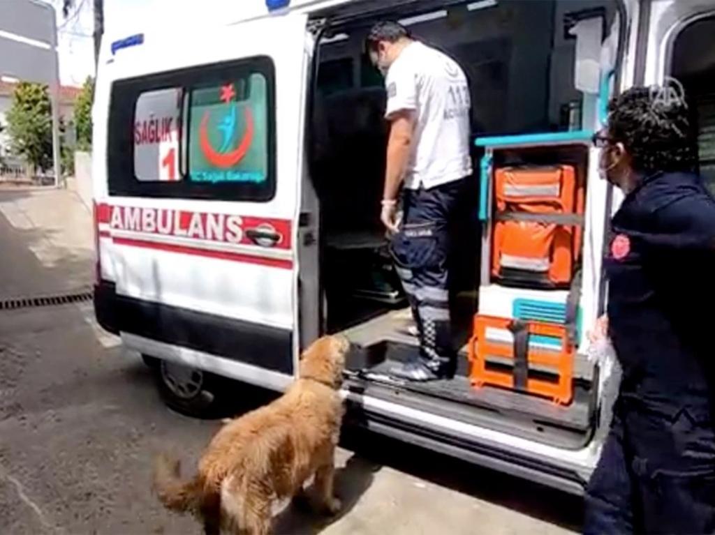 Perro persigue a ambulancia que llevaba a su dueña al hospital