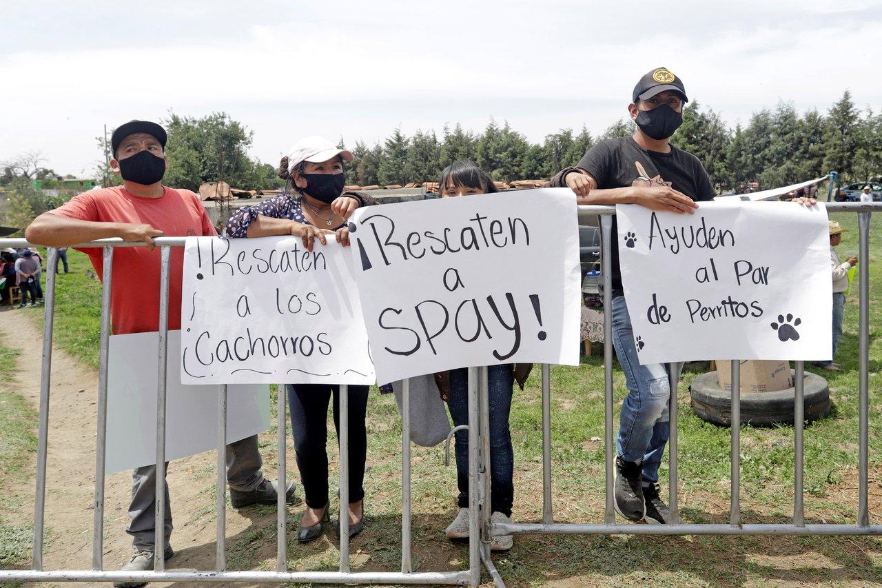 'Spay' y 'Spike', los perritos rescatados del socavón en Puebla