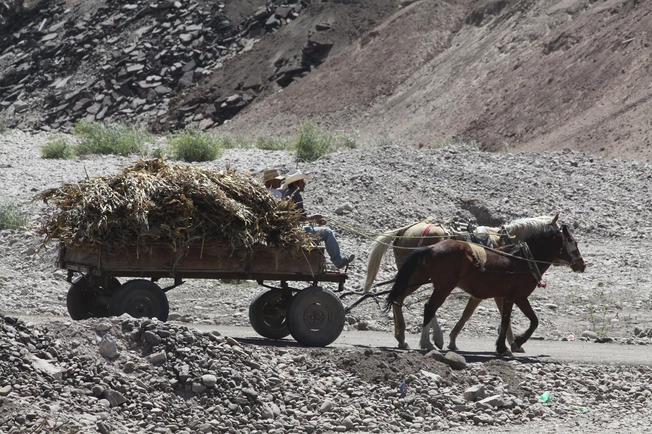 Piden pensión para sector agropecuario