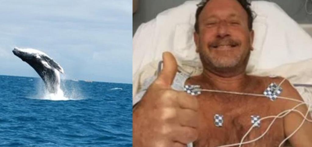 Buzo sobrevive tras ser tragado por una ballena; el animal lo escupió