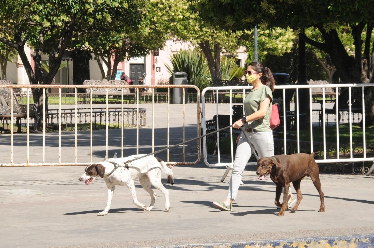 Realizan 10 esterilizaciones de mascotas diarias