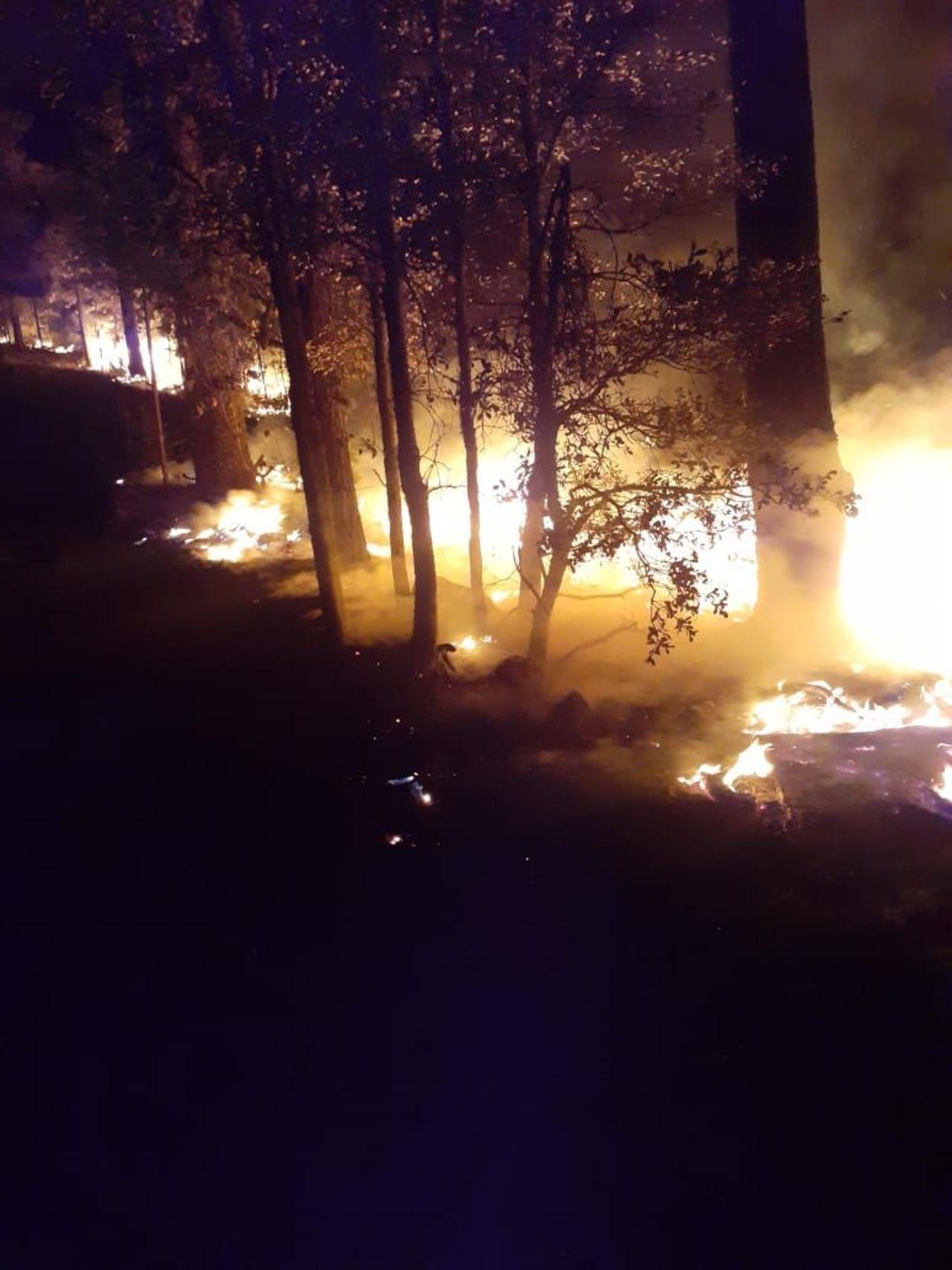Mal año, en cuanto a incendios forestales