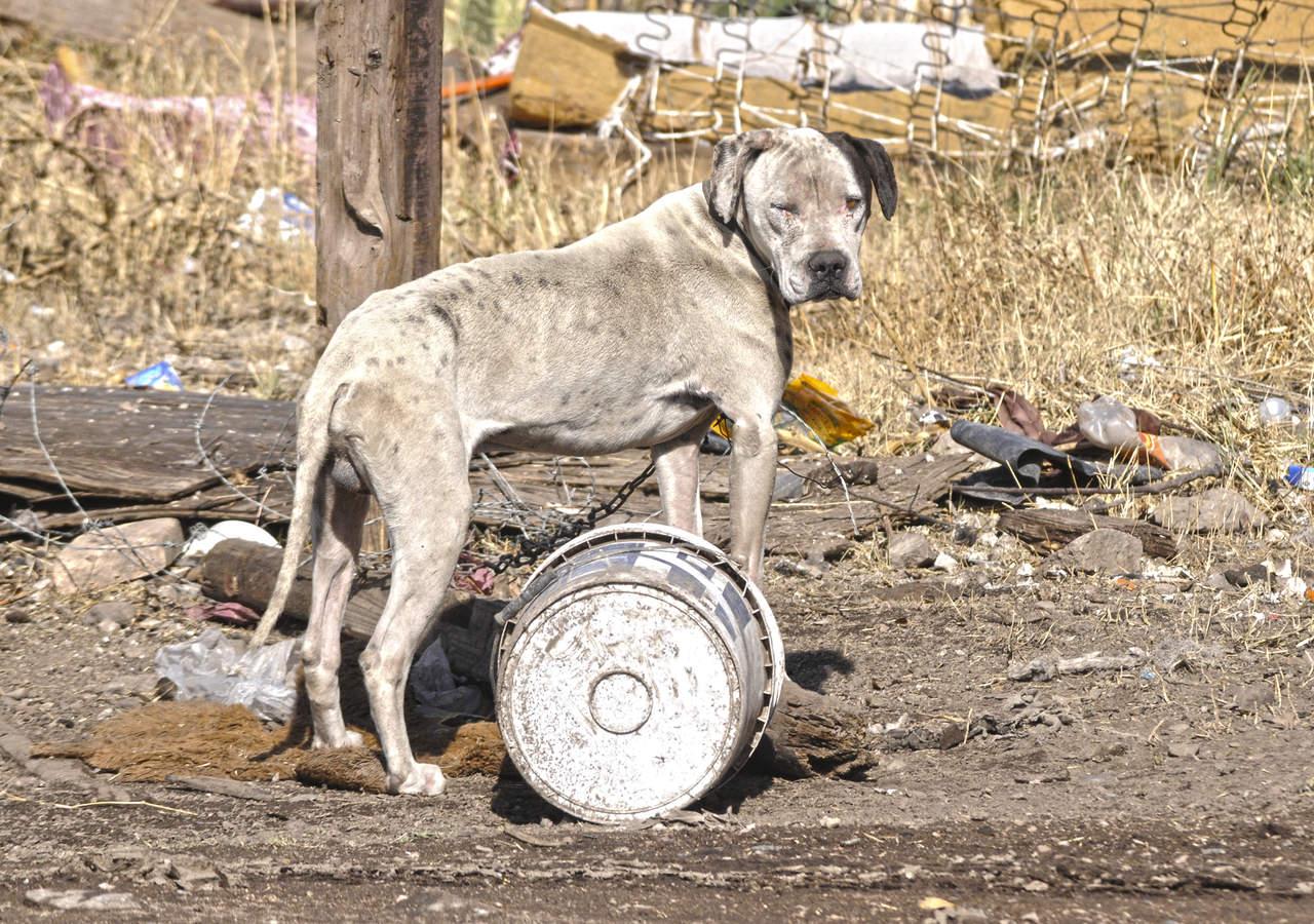 Retomarán padrón de perros en Durango