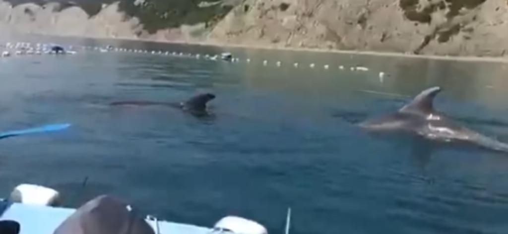 Voluntarios liberan a delfines atrapados en redes de pesca