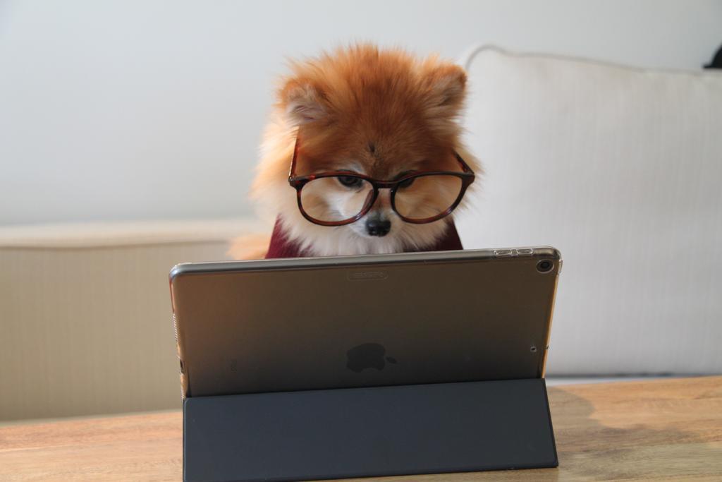 Conoce los beneficios de la tecnología para perros