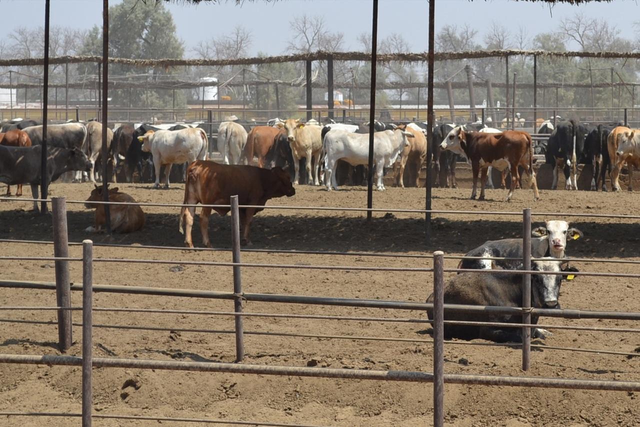 Son 46 mil toneladas de carne de bovino producidas en Durango