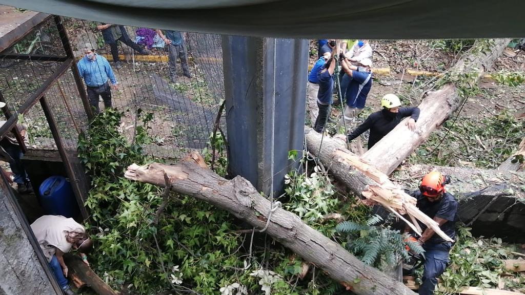 Árbol cae en aviario del Zoológico de Chapultepec