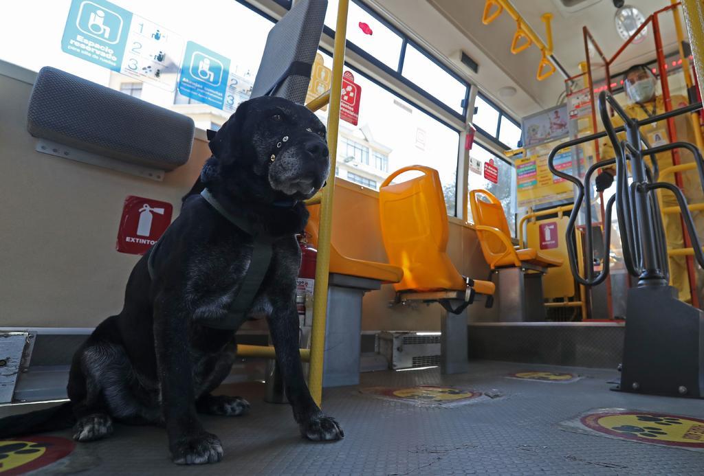 'Don Alonso', el perro que viaja en transporte público y 'conquista' a Bolivia