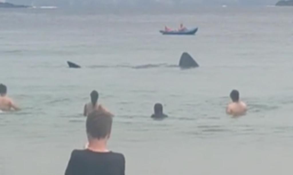 Tiburones nadan cerca de bañistas en una playa irlandesa