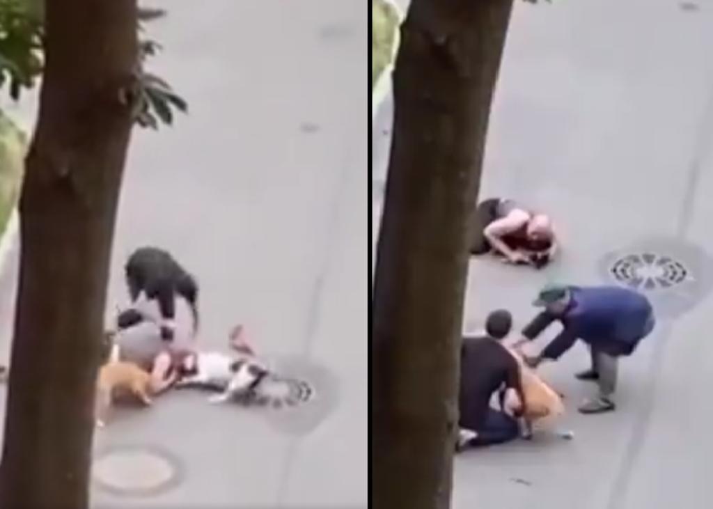 Dueño protege con su cuerpo a su perro del ataque de otros canes