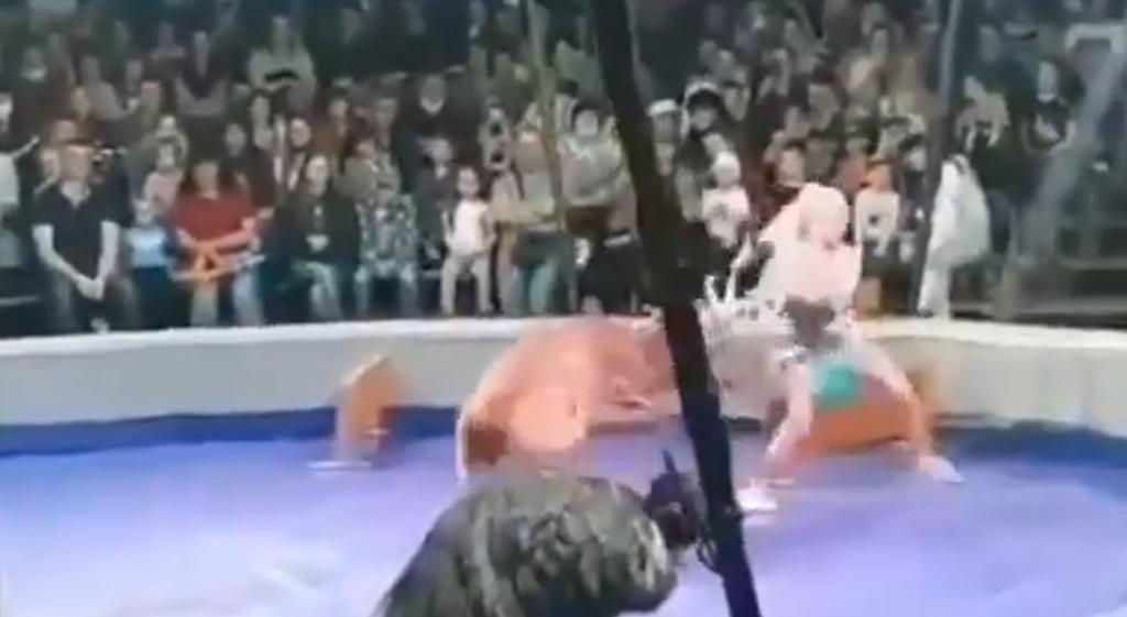 Mujer es atacada por ciervo en plena función de circo
