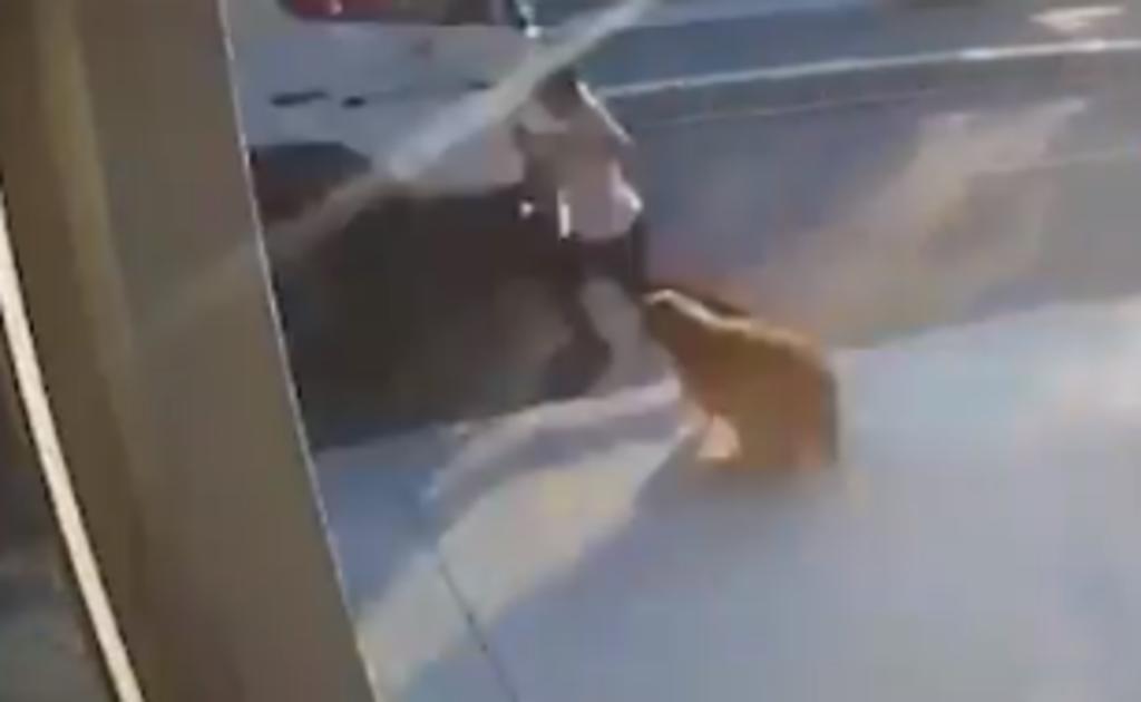 Hombre corre hacia la calle porque un perro lo asustó y termina atropellado