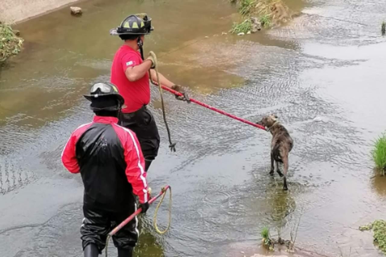 Rescatan a perrito del Arroyo Seco