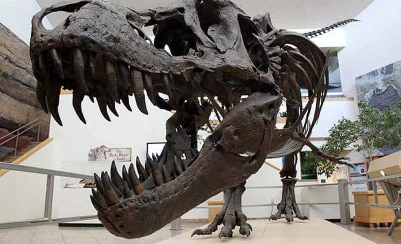 Un estudio apunta a que los dinosaurios ya se extinguían antes de lo que se creía