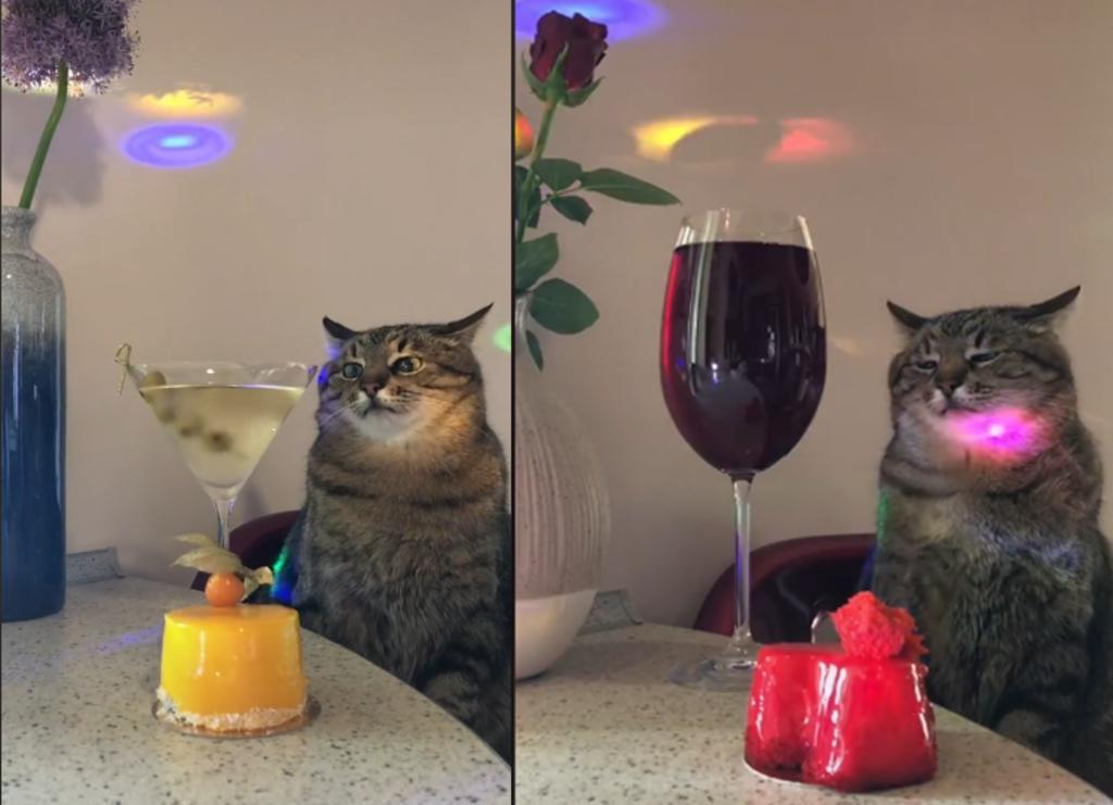 Gato causa sensación por su expresión aburrida en videos virales