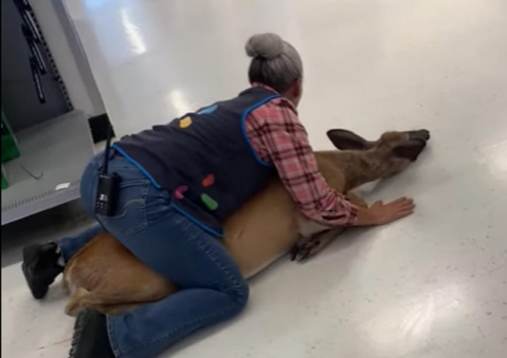 Venado ingresa a supermercado y es sometido en el piso por una empleada