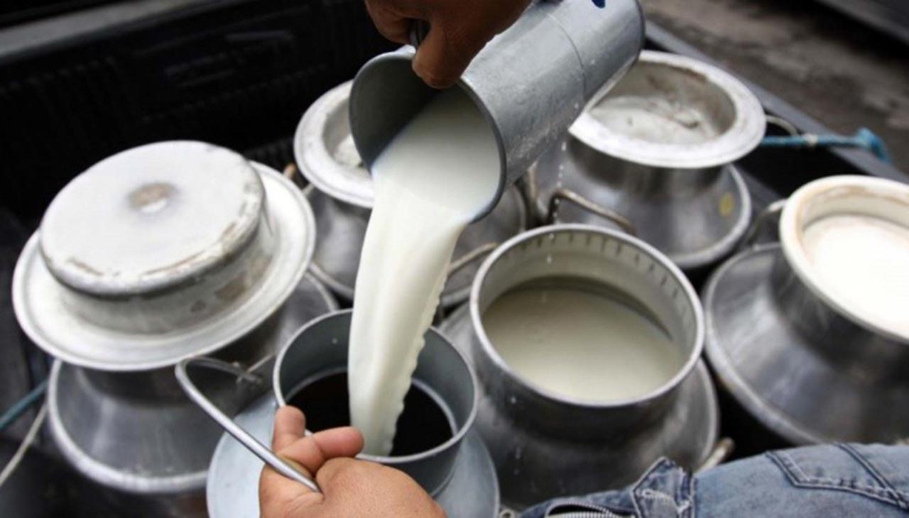 Avanza la producción de leche en Durango