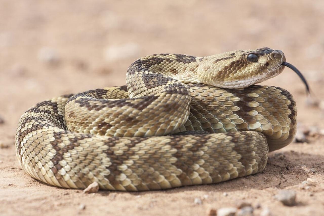 Plena temporada de serpientes
