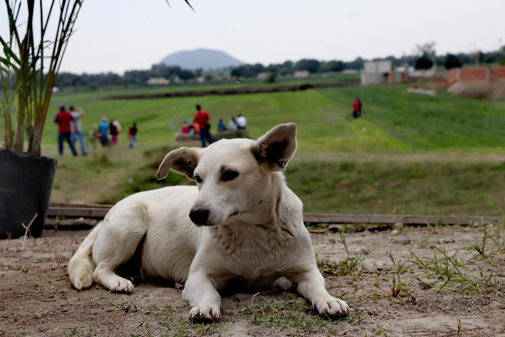Investigan en Oaxaca muerte por envenenamiento de ocho perros