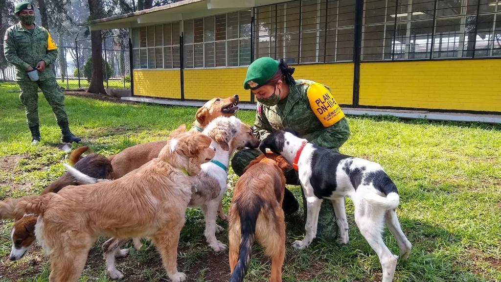 Ejercito rescata y crea refugio para perros que deambulan en zona del aeropuerto Felipe Ángeles