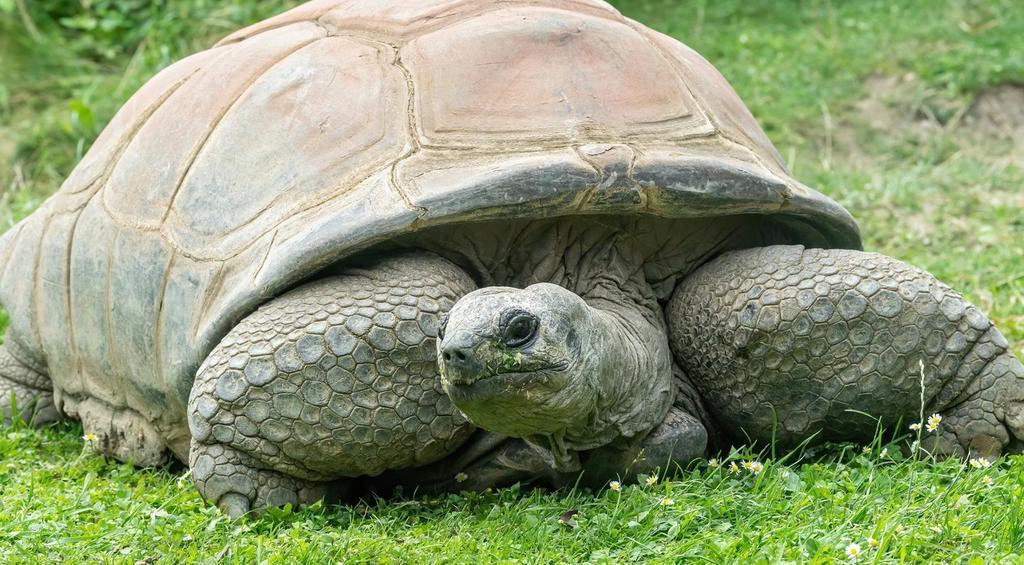 Fallece 'Schurli', la tortuga que rondaba los 130 años de edad