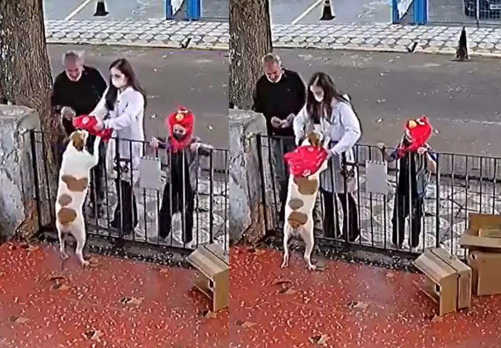Le regalan suéter a perro que fue víctima de robo