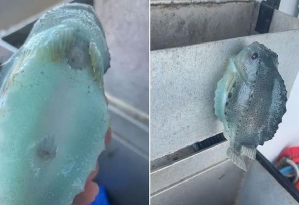 'Tiktoker' muestras un pez que atrapó, 'que se adhiere a las paredes'